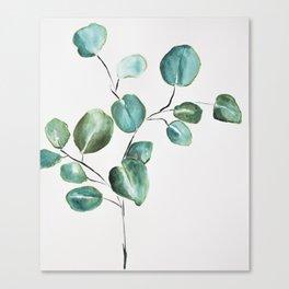 Eucalyptus leaves, illustration, botanical Canvas Print