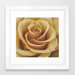 Rose Textures Framed Art Print
