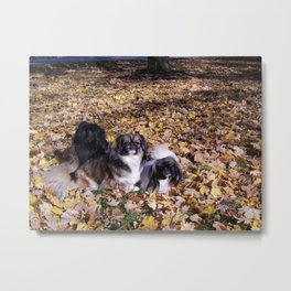 Playing in the leaves Metal Print