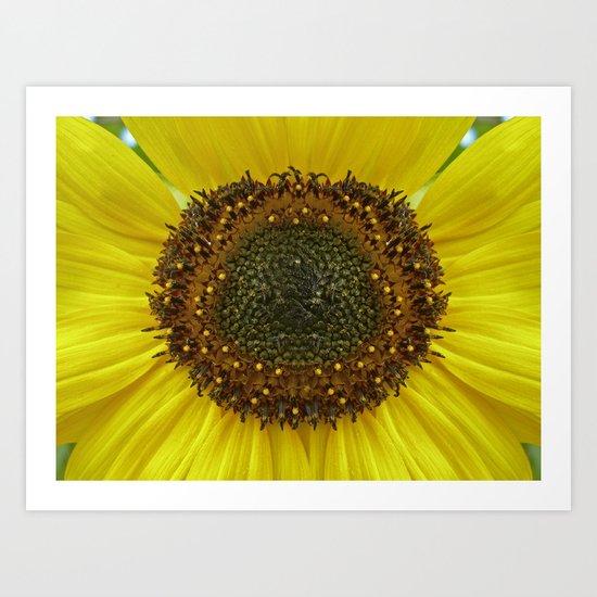 sunflower macro IV Art Print