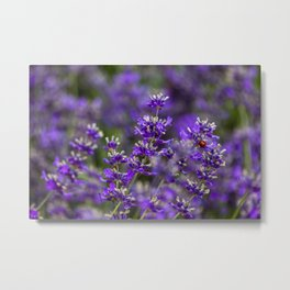 Lavender and Bug Metal Print