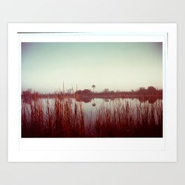 Early afternoon down by the swamp in the Florida keys Art Print
