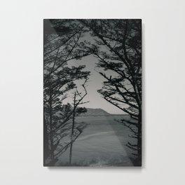 B&W Canopy Trees Metal Print