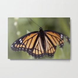 Monarch Butterfly IV Metal Print