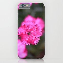 Pink Dianthus iPhone Case
