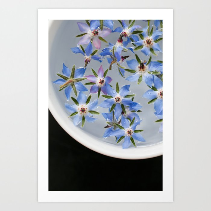 Borage Flowers Art Print