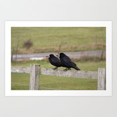 Wise Old Ravens  Art Print