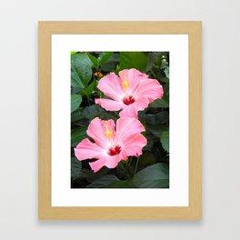 Pink Hibiscuses Framed Art Print