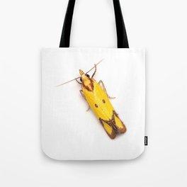 Sulphur Knapweed Moth (Agapeta zoegana) Tote Bag