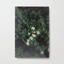 Backyard Flowers (3) Metal Print