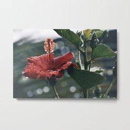 Hawaiian Rain Metal Print