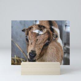 Goat Kid Mini Art Print