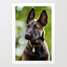 Cute Malinois - shephard puppy Art Print