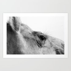 Ready for my close up... Art Print