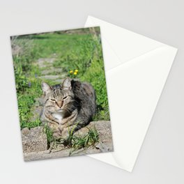 Sleepy Cat in Sunlight Portrait Photography Stationery Cards