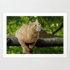Photograph of a Cat hanging on a Limb Art Print