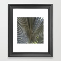 Gray Frond DP150314-16 Framed Art Print