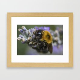 Bees Knees Framed Art Print