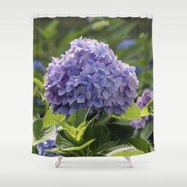 Hydrangea in Bloom Shower Curtain