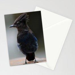 Stellers Jay | Nature | Wildlife Photography | Birds | British Columbia Stationery Cards