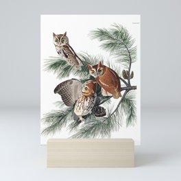 Little Screech Owl by John Audubon Mini Art Print