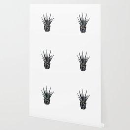 Dark Aloe Vera Plant black and gold succulent Wallpaper
