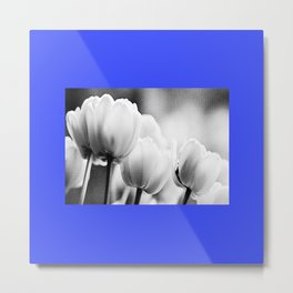 small blue tulips Metal Print