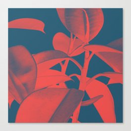 Rubber Plant red and blue Canvas Print