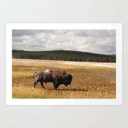 Bison of Yellowstone Art Print