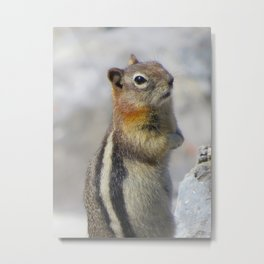 Golden Mantled Ground Squirrel Metal Print