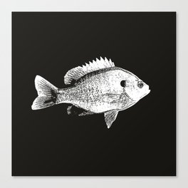 Black and White Bluegill Canvas Print