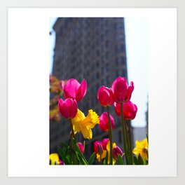 Tulips In NYC Art Print