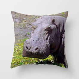 Angry Hippo, Africa wildlife Throw Pillow