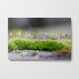 Mossy Moss Metal Print