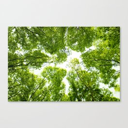 New green leaves Canvas Print