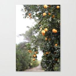 Ojai Oranges Canvas Print