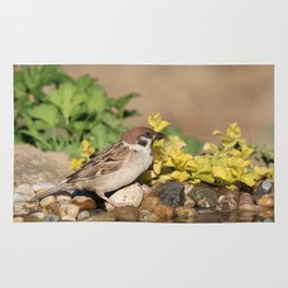 Sparrow at water Rug