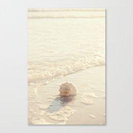 Seashell by the Seashore I Canvas Print