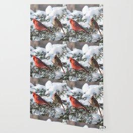 Sunny Winter Cardinals (square) Wallpaper
