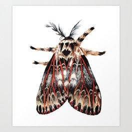 Moth Print Art Print