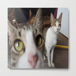 Back Yard Kitties  Metal Print