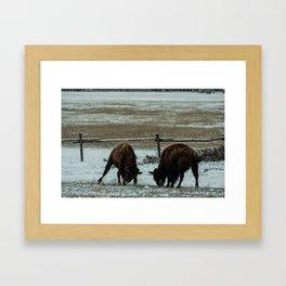 Fighting Bison Framed Art Print