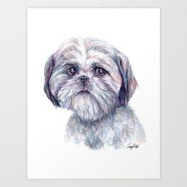 Shih Tzu - Dog Portrait Art Print