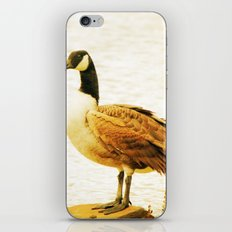 Canadian Goose iPhone & iPod Skin