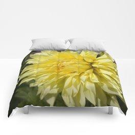 Yellow Dahlia Comforters