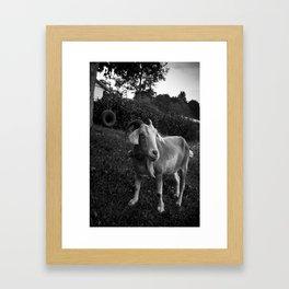Noddy the Goat Framed Art Print