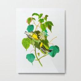 Hemlock Warbler Bird Metal Print