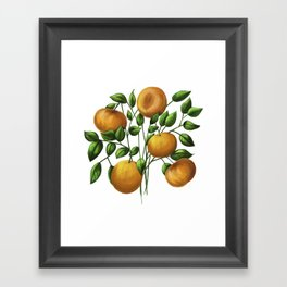 Bouquet of tangerine Framed Art Print