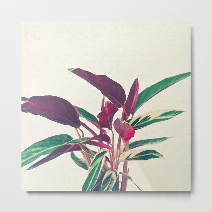 Prayer Plant Metal Print
