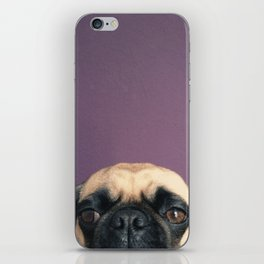 Lurking Pug iPhone Skin